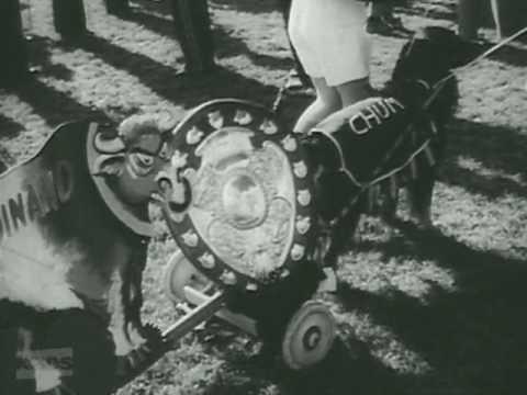 NZ On Screen: NZ Mirror No 24- Ranfurly Shield Parade