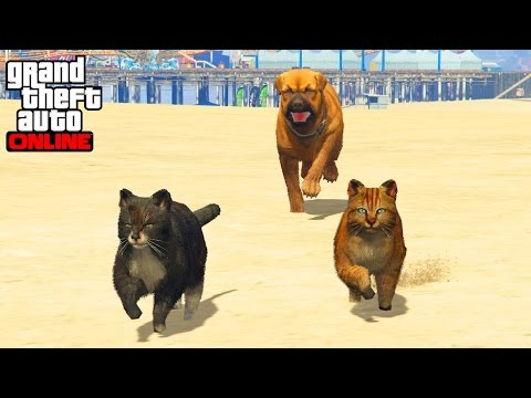 CHIEN VS CHATS - GTA 5 ONLINE