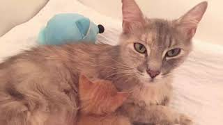 История про маленького котёнка и кошку, которые обрели друг друга.