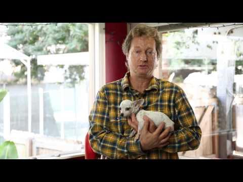 raising-a-chihuahua-:-raising-your-dog