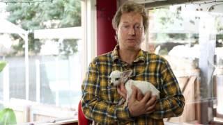 Raising a Chihuahua : Raising Your Dog