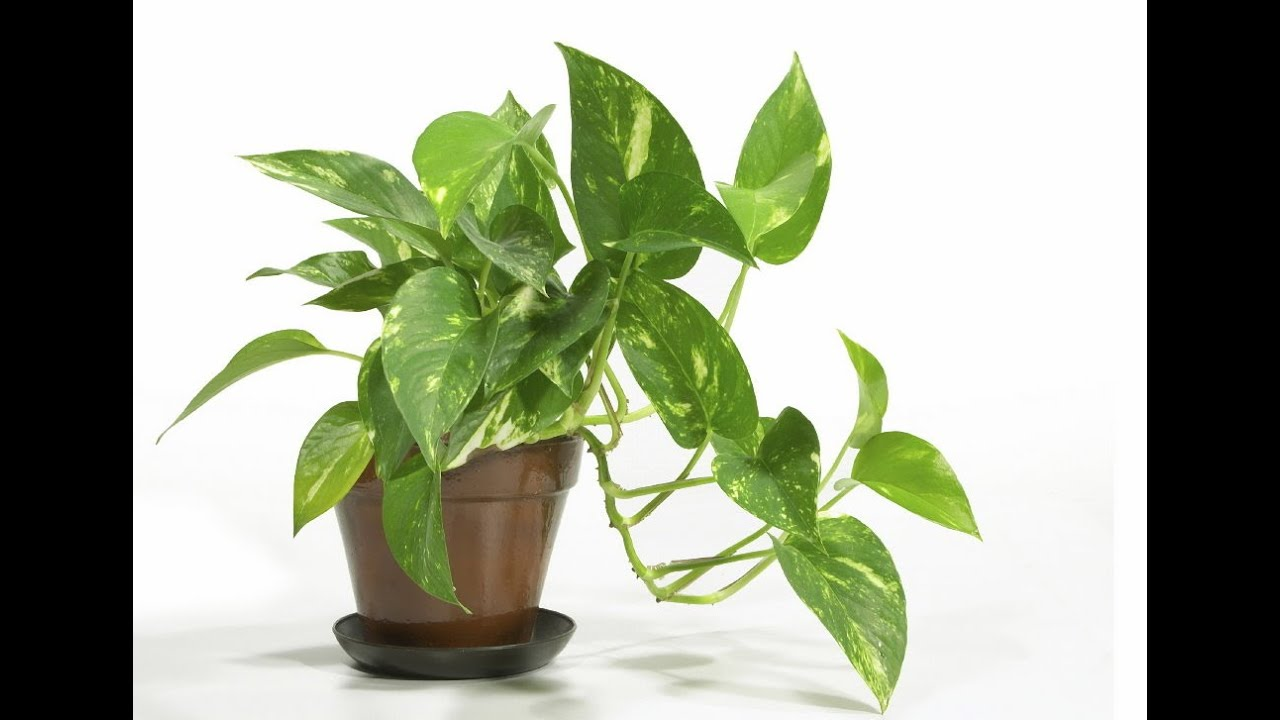 Easy houseplants easy house plants low light youtube for Easy to grow indoor plants