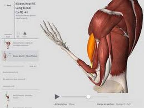 Complete Anatomy Overview