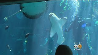 STEAM Sundays: Taking Care Of The Animals The Aquarium Of The Pacific