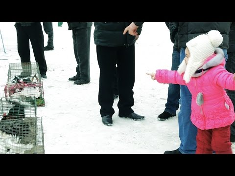Видео Фотографии девушки со страпонами