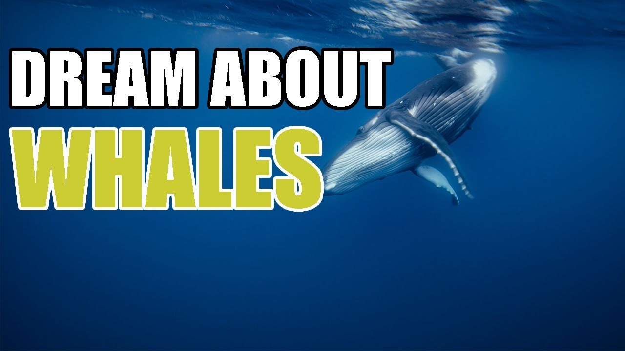 What Do Dreams About Whales Mean? Whale Dream Meaning - Sign