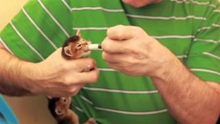 Кормление котят (26.03.16)