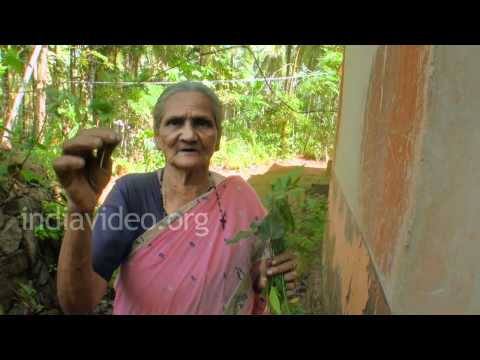 Preventive medicine for Chikungunya - Withania root