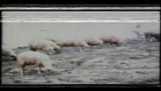 Bir Yigit Gurbette Gitse (1977) Nuri Sesiguzel,Esen Püsküllü-01.avi