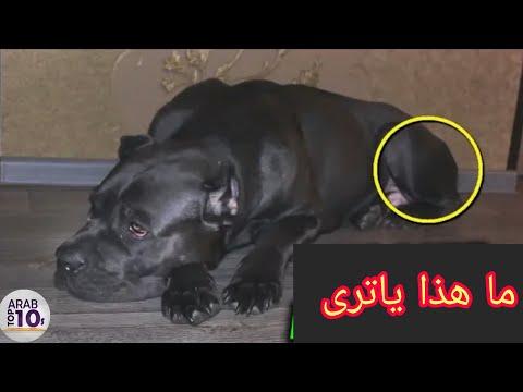 هذه الكلبة  ولدت ولن تصدق ما خرج منها.  لا يصدق