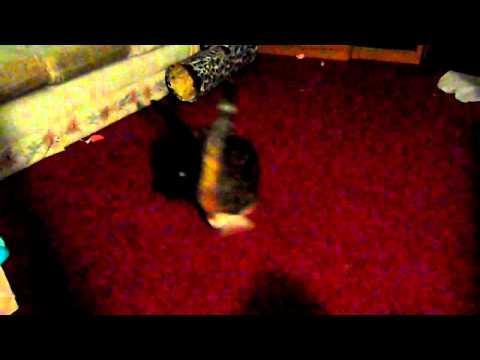 Nora Skyler dancing