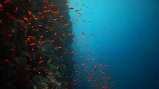 Red Sea Nauticam Try out with Alex Mustard Thumbnail