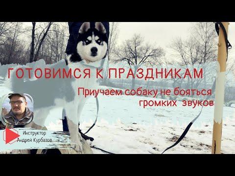 Вопрос: Как научить собаку не бояться резких звуков?