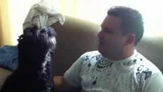 Ensinando meu cachorro a Uivar