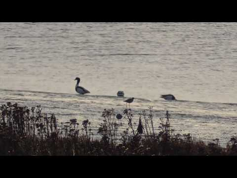 Wallasea Island Nature Reserves