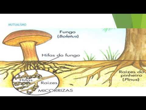MICROBIOLOGÍA DEL SUELO A.W