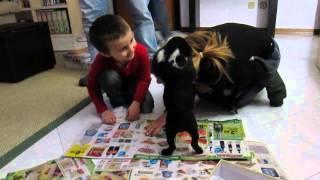 Che Faccia Fareste? Staffordshire Bull Terrier - Staffy Puppy