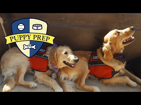 The Puppies Go To The Bus Station