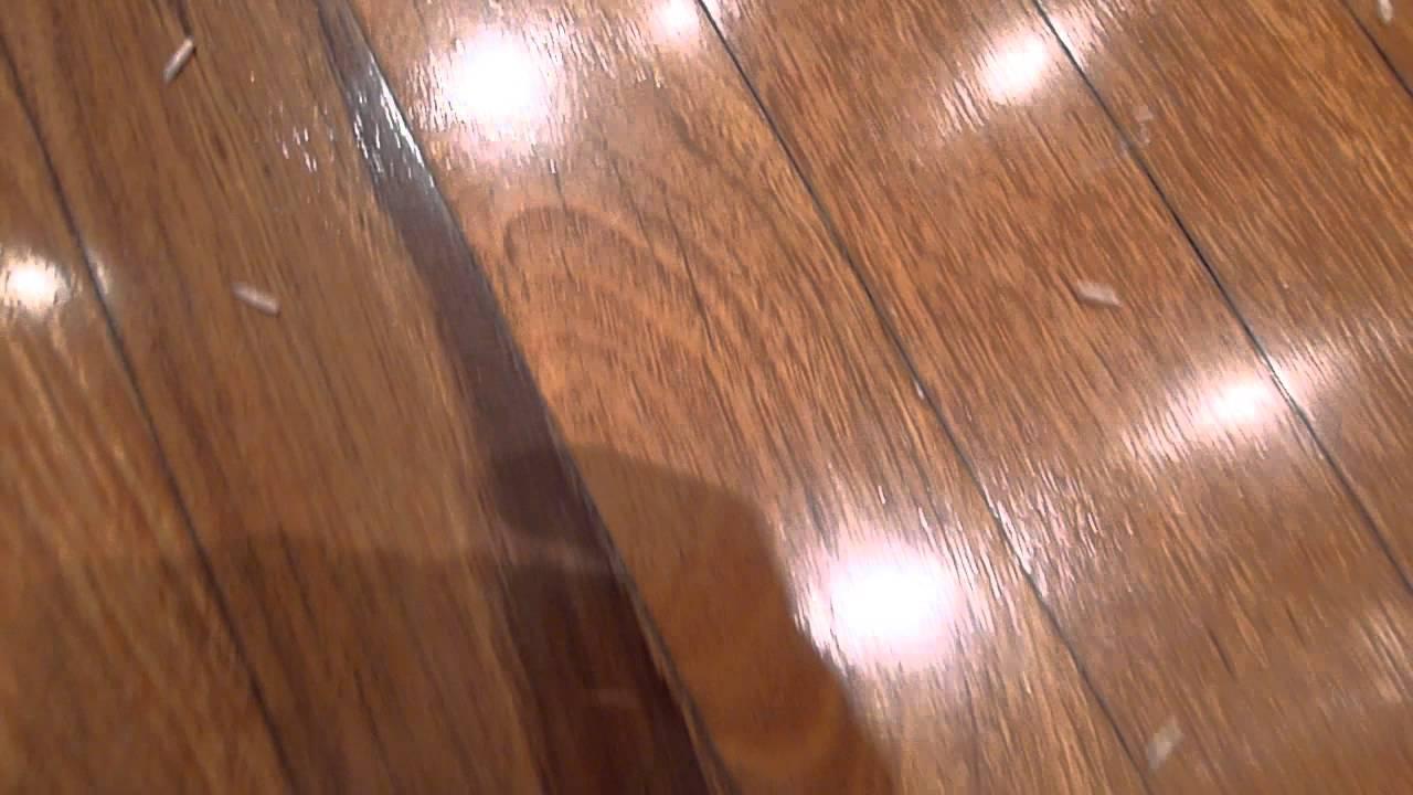 maggots in house on floor   Floorviews co