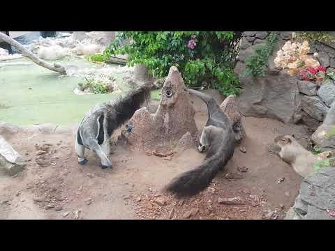 South American mixed enclosure