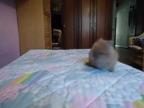 Cute baby bunny jumping on bed!