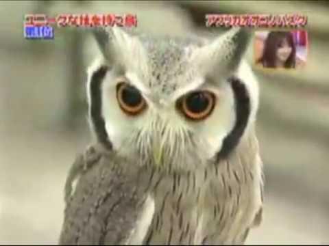 Чем испуганная сова похожа на испугавшегося оратора.