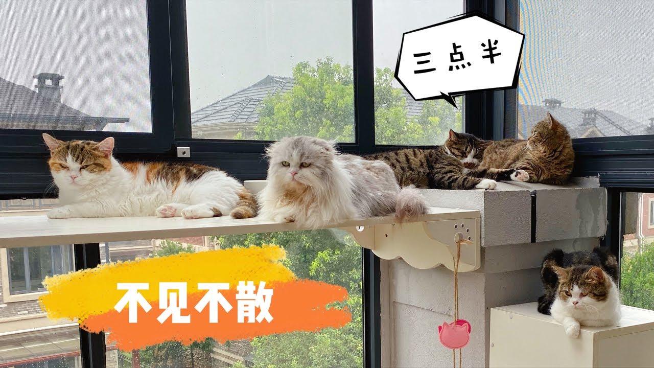 【李喜貓】15隻貓1隻狗被無良主人強迫賣萌:為了這個家,我們太難了!