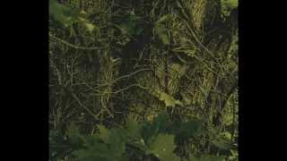 Forest & DarkPsy Trance Ritual / Mixed by Digital Mutant