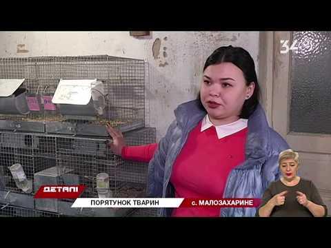 34 телеканал: Зоозахисники Дніпропетровщини врятували декілька десятків тварин