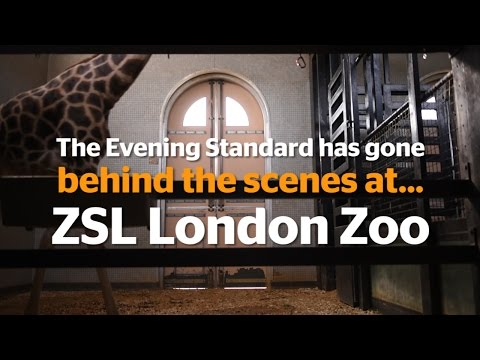 Behind The Scenes At...ZSL London Zoo