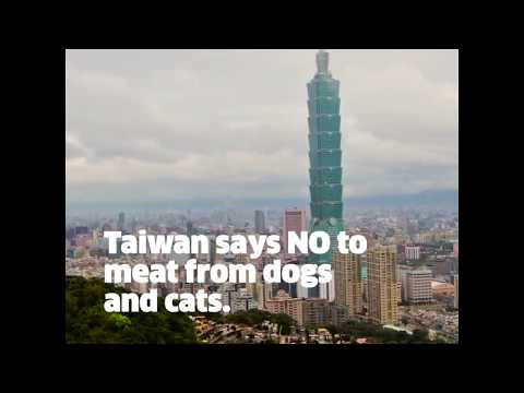 Taiwan Moves to Help Dogs and Cats!