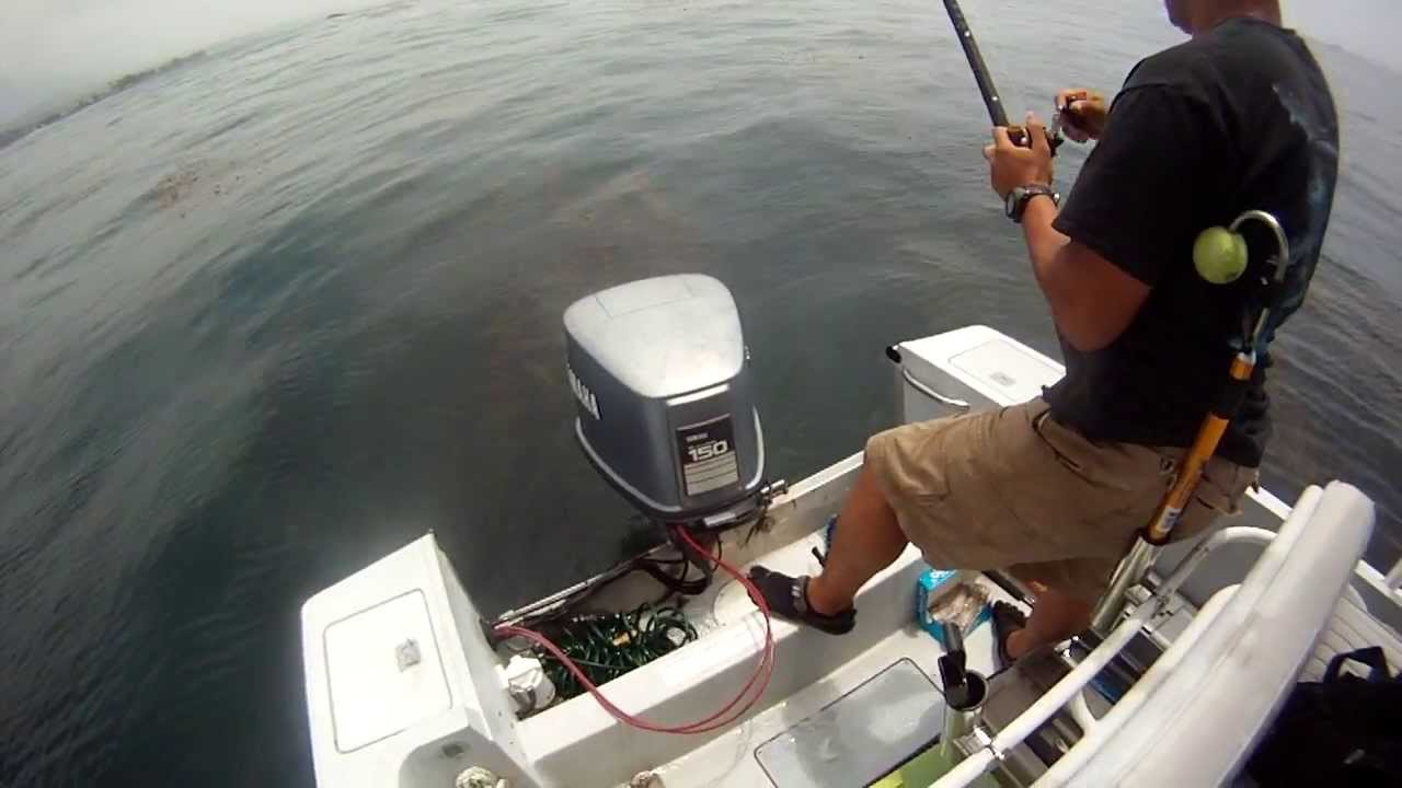Dana point fishing the kelp july youtube for Fish count dana point