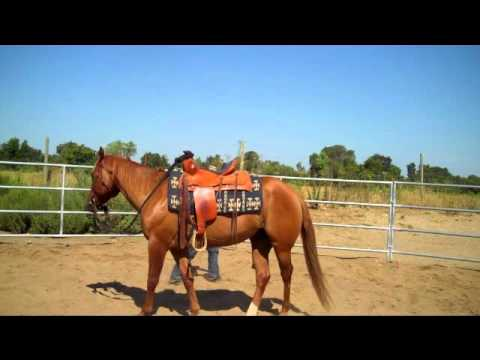 Red, red dun quarter horse gelding for sale *SOLD* - YouTube