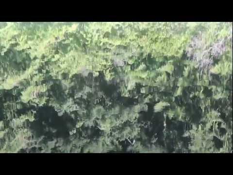 Jason Urick - Ageless Isms (Official Music Video)