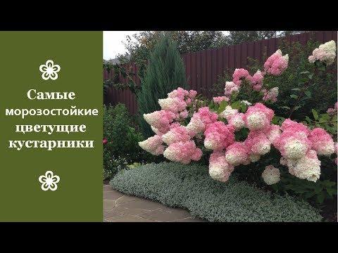 Весенние цветы. Названия и фото