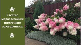 видео Многолетние кустарники цветущие все лето фото и название
