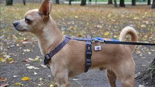Trixie TX 15654 шлея Джимми для собак нейлон 30 40 см  15 мм