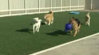 The Local Bark - The Best Dog Resort In Sacramento.