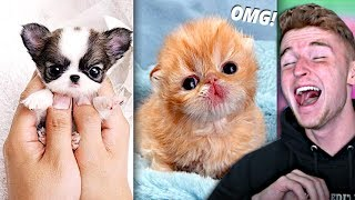 Download Try Not To Say AWW Challenge.. (VERY HARD) Mp3 and Videos