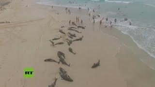 Más de 130 delfines mueren en una isla de África por causas desconocidas