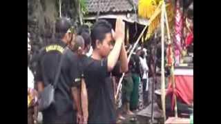 Video Buldog Melukat Di Pura Windhu Segara download MP3, 3GP, MP4, WEBM, AVI, FLV Juni 2018
