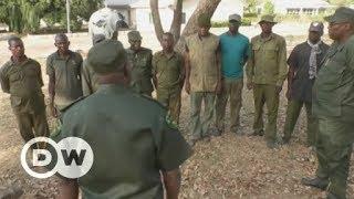 Saving Nigeria's last lions | DW English