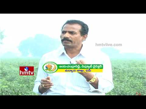 Guntur Chilli Cultivation Information Guide By Deputy Director Jayachandra Reddy | Nela Talli | HMTV