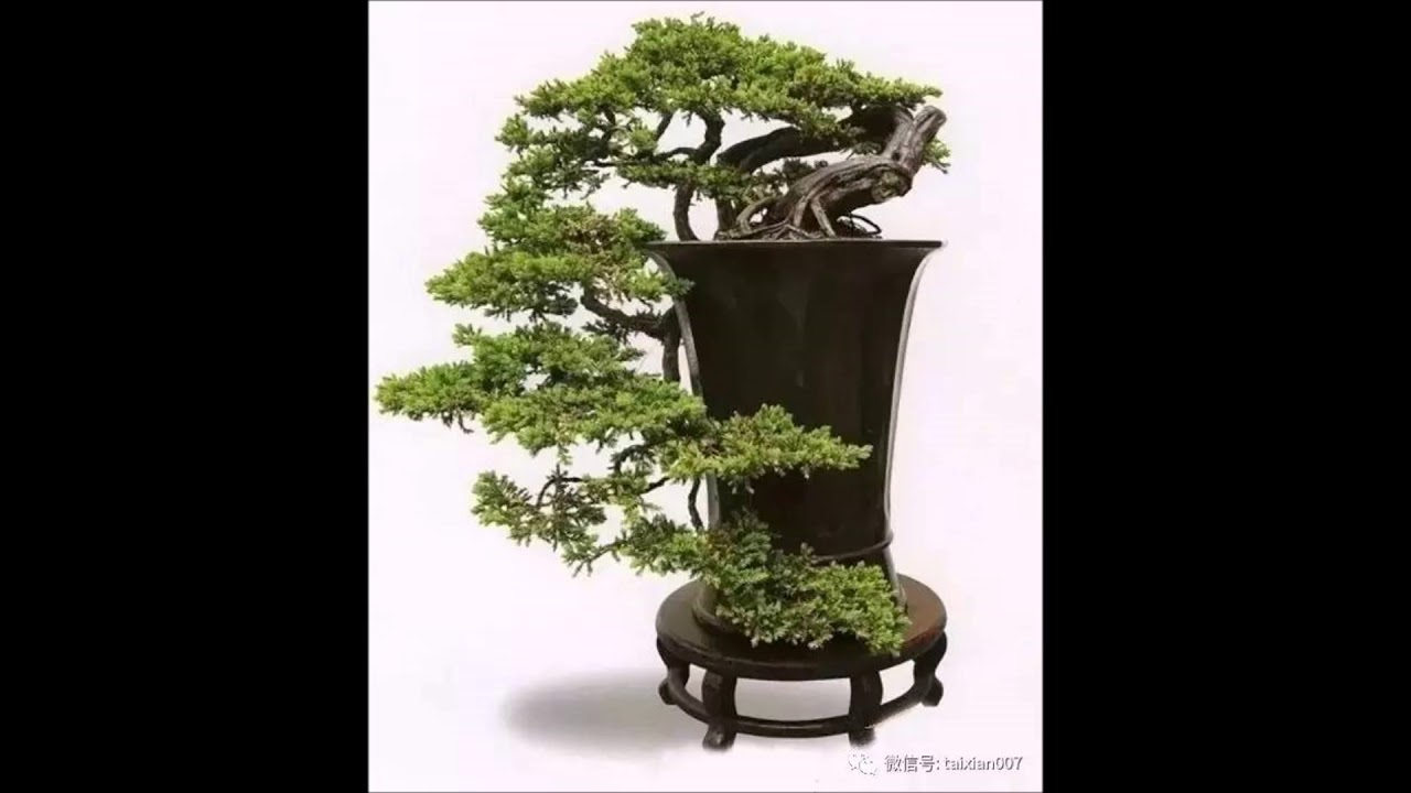 Bonsai Cascade Style Youtube