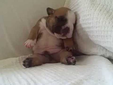 Il cucciolo che si addormenta sul divano youtube - Pipi sul divano ...