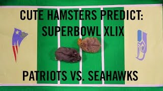 Superbowl XLIX Prediction :Cute Hamsters