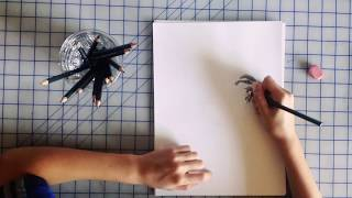 How To Draw A Cactus Wren Bird