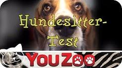 Der Hundesitter Test auf YouZoo