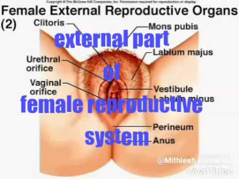 External part of female reproductive system