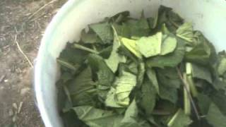 free fertilizer how to make a comfrey bucket(hi this video will show you how i made a comfrey bucket to get myself some free fertilizer., 2011-04-21T21:35:00.000Z)